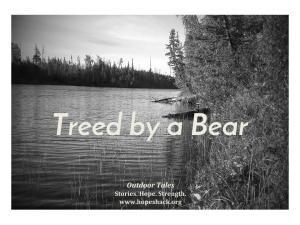 treed-by-a-bear